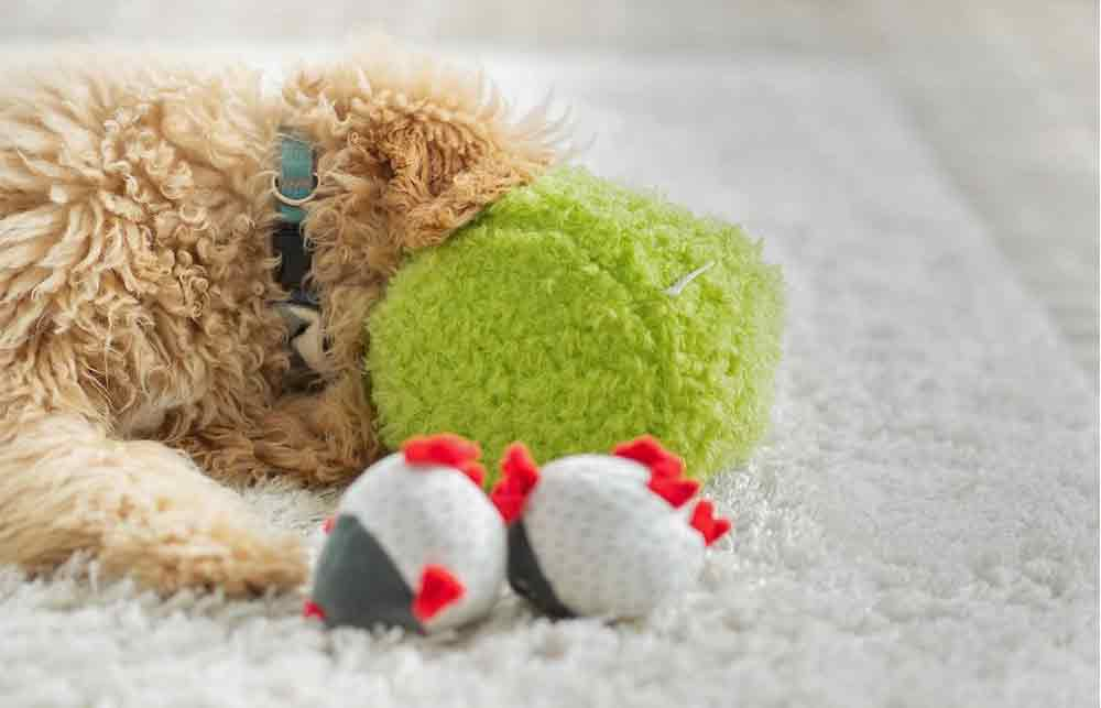 Plush Dog Toys for Your Puppy
