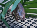 SOLD Ambilobe Female RBBB Sire Red Body Blue Bar Panther Chameleon