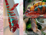 SOLD #F03-02 Ambilobe Female RBBB Red Body Blue Bar Panther Chameleon