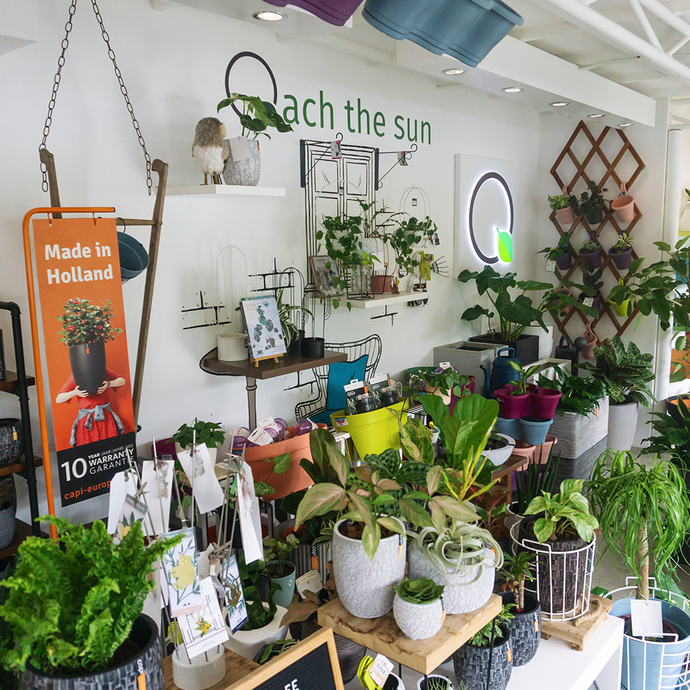 Spot.PH: 10 Plant Shops Every Plantita Should Check Out