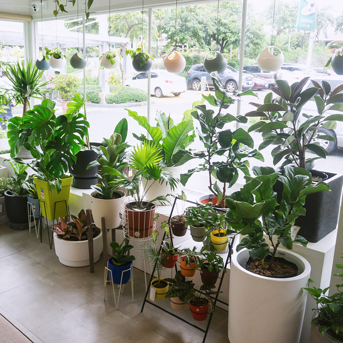 8List.PH: Local Shops Selling Potted plants for your indoor garden