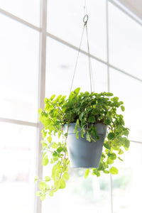 Loft Urban Hanging Basket