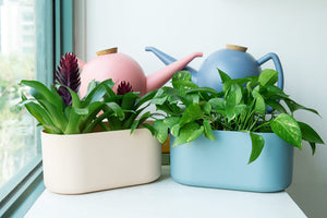 Bowli Watering Can 2.5L