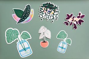 Monstera Propagation Sticker
