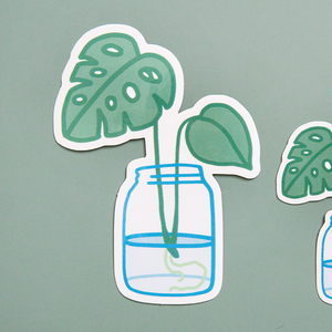 XL Monstera Propagation Sticker