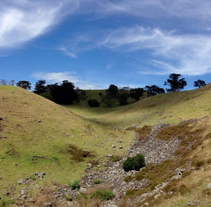 Blog about in the shadows of Mangere Mountain