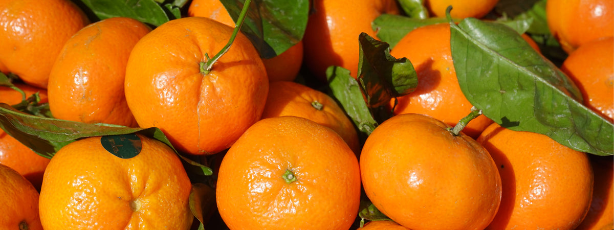 Organic Clementine WHAT'sIN