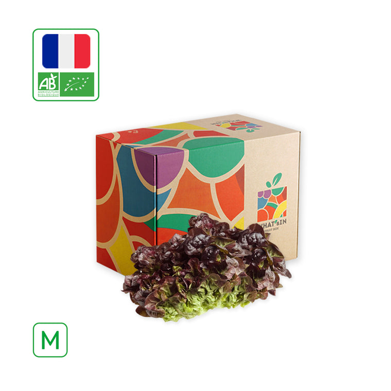 WHAT'sIN Oak Leaf Red Salad Solo (M - 2.5 KG)