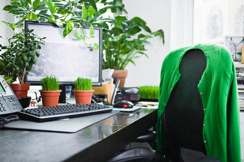 indoor office plants green design