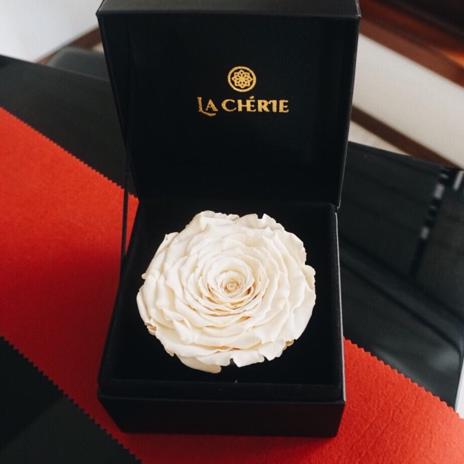 Preserved Ecuadorian Roses: CREAM WHITE