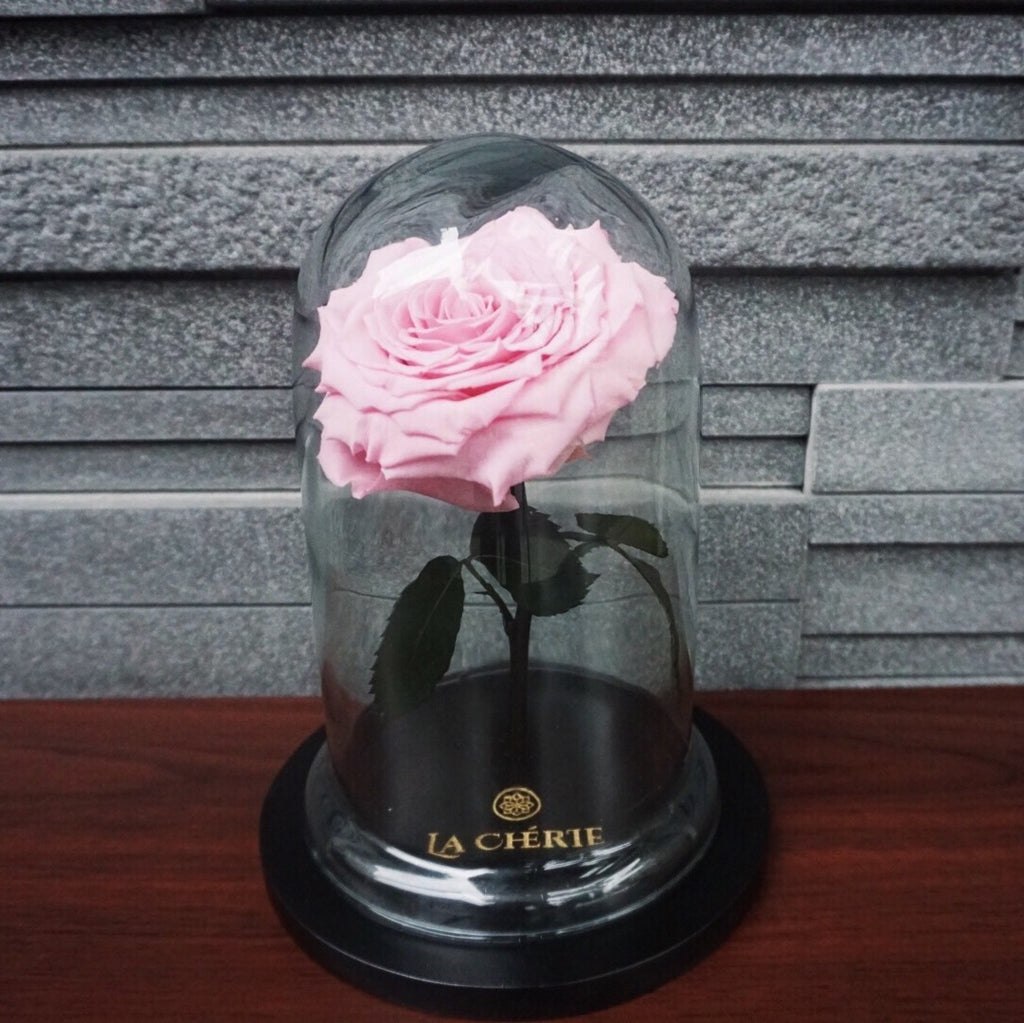 Beauty & the Beast Preserved Ecuadorian Rose: CARNATION PINK