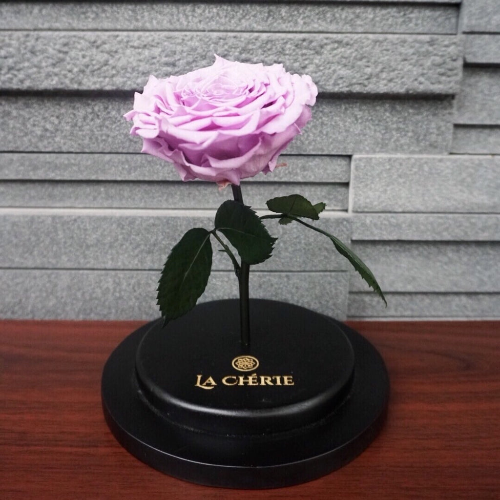 Beauty & the Beast Preserved Ecuadorian Rose: LAVENDER