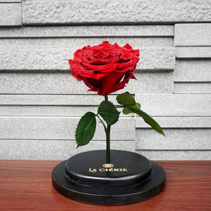 Beauty & the Beast Preserved Ecuadorian Rose: GLITTER RED