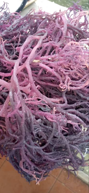 5 Lb. Purple Sea Moss