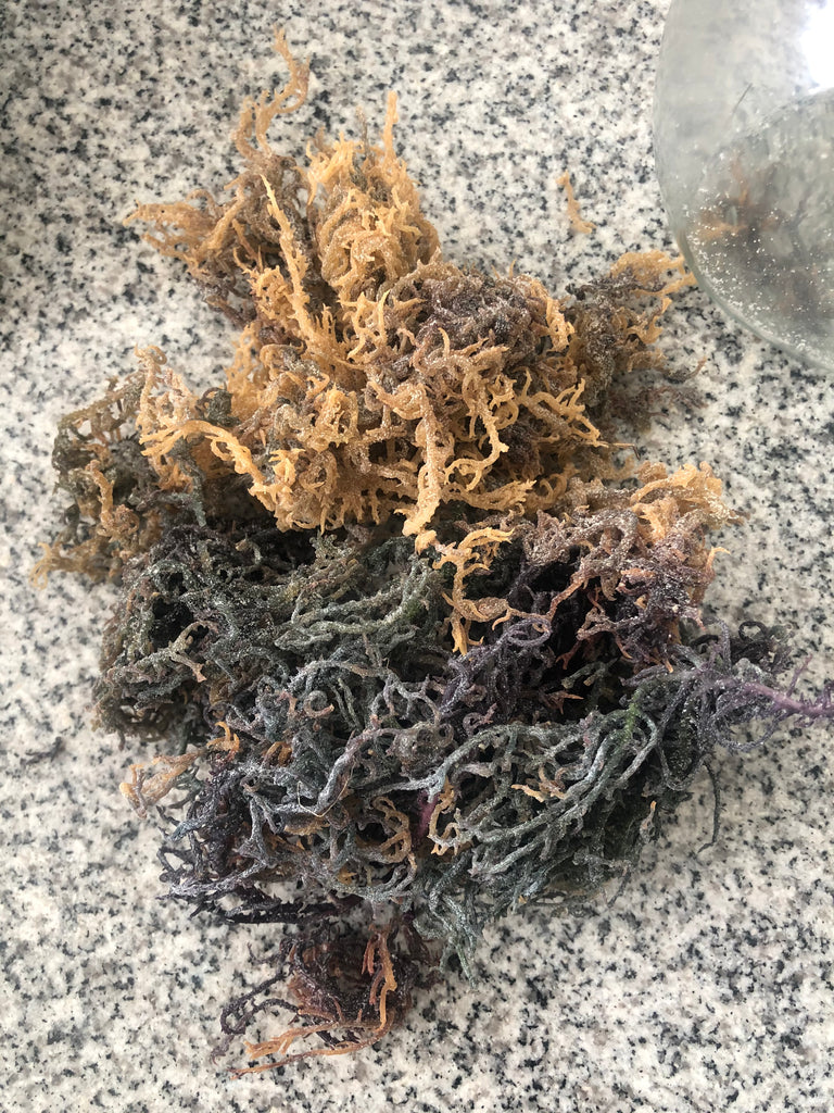 "100% Raw Organic ""Incredible"" Sea Moss - 2 ounces"