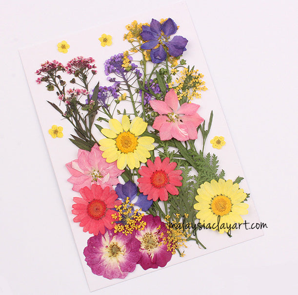 Colorful Mixed Pressed Dried Flower