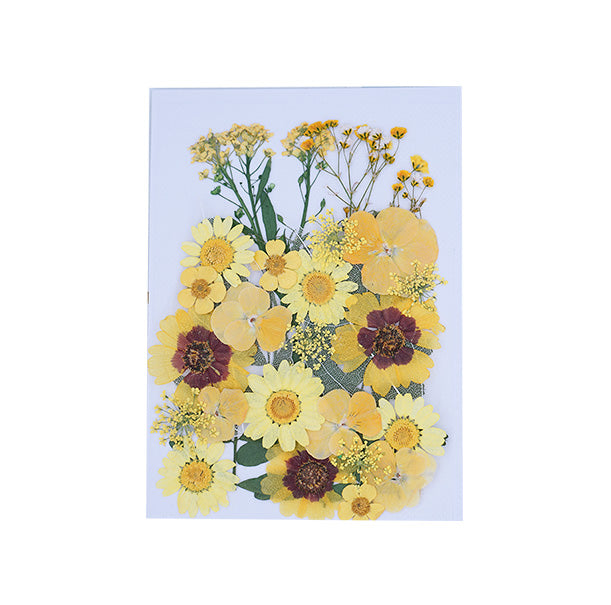 Yellow Mixed Pressed Dried Flower
