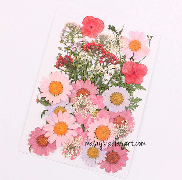 Pinkish Mixed Pressed Dried Flower