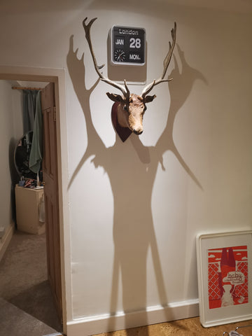 Horny and humorous ADULT Mounted Deer head.