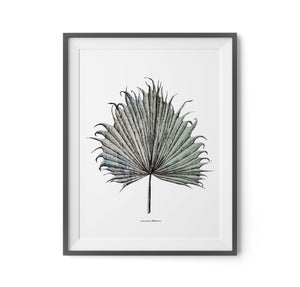 TROPICAL PALM LEAF PRINT