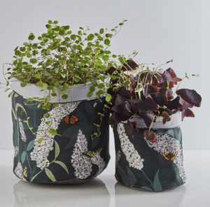 BUDDLEIA PLANT POT