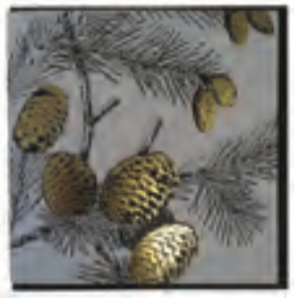 FOILED GOLD FIR CONES SQ CARD