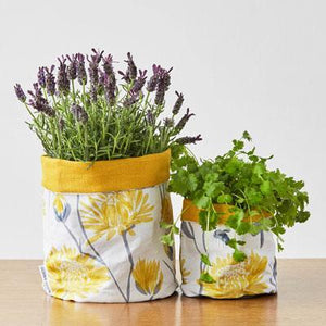 CHRYSANTHEMUM PLANT POT