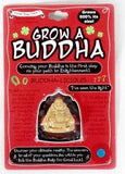 Grow a Buddha Novelty Gift