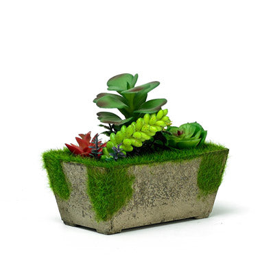 Evergreen Artificial Succulent In A Natural Planter