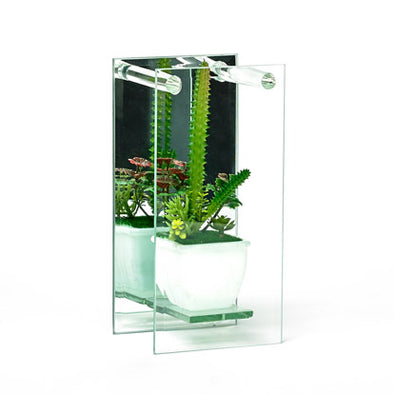 Decorative Plant In A Mirrored Glass Display
