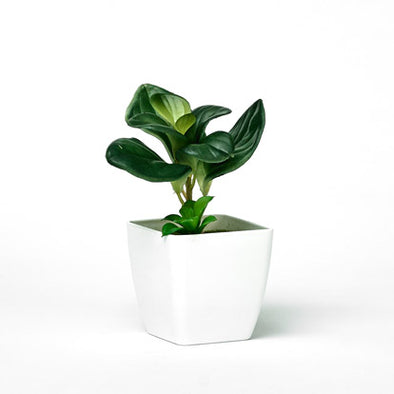 Green Plant In Mini Decorative Planter