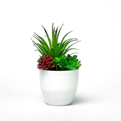 Green Red Succulent In Mini Decorative Planter