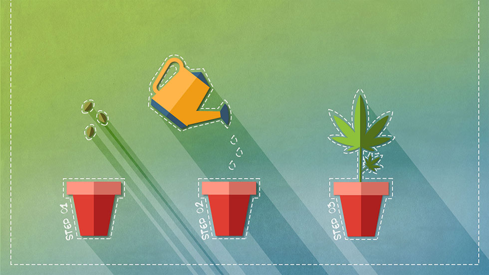 The Basics of Growing Marijuana
