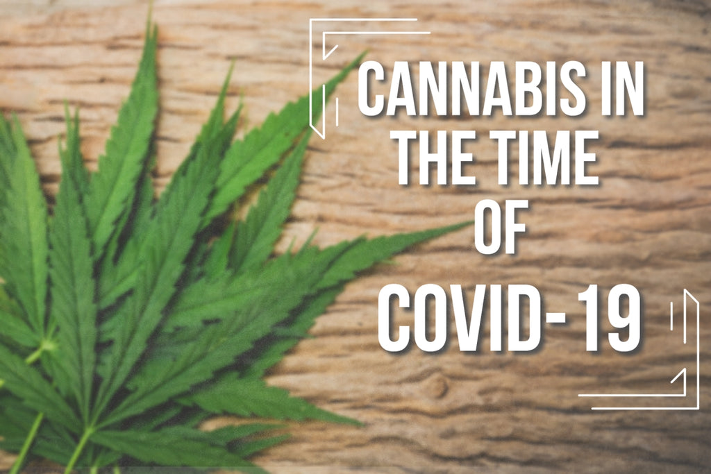 Growing Cannabis during Covid-19