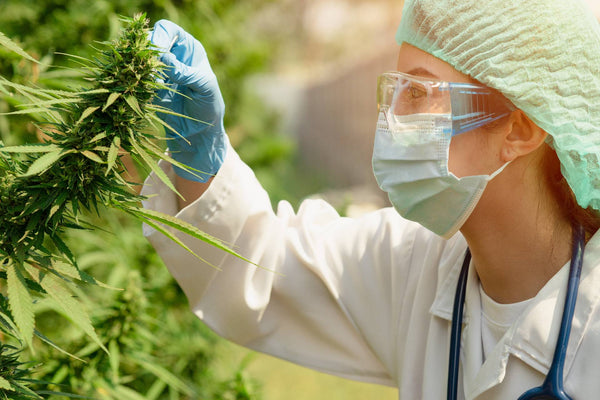 Job Skills for the Cannabis Industry