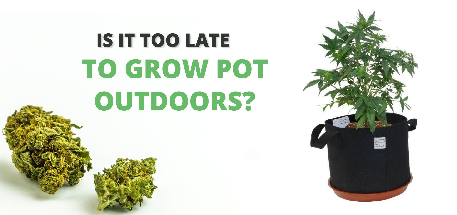 Is it too late to grow pot outdoors?