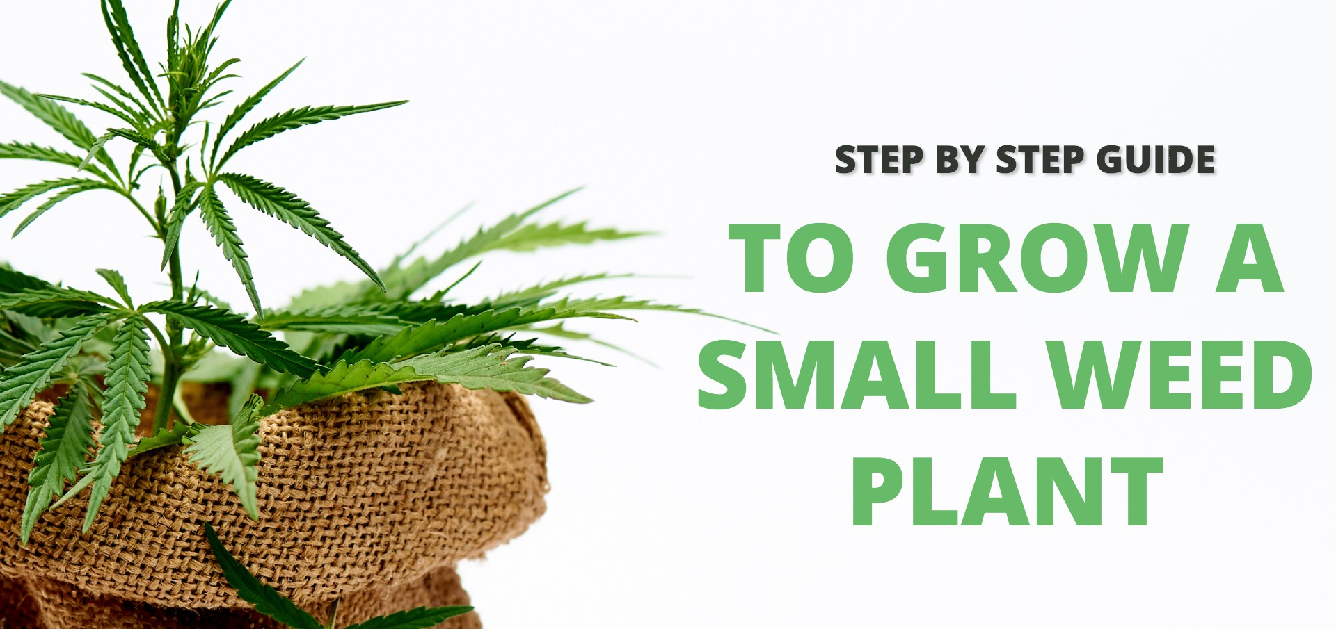 how to grow a small weed plant