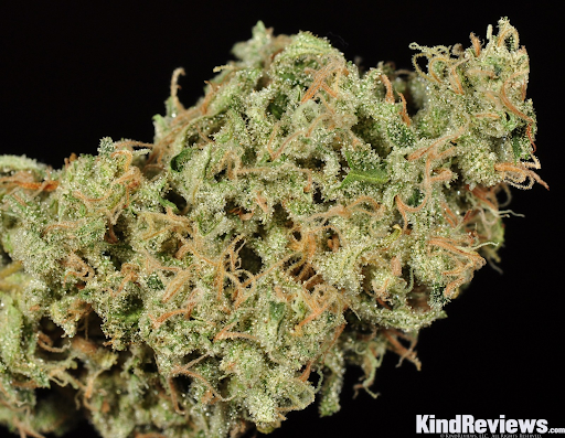 Macro shot of a Durban cannabis nug.
