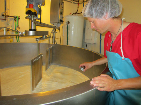 adding enzymes to milk to start the cheese making process