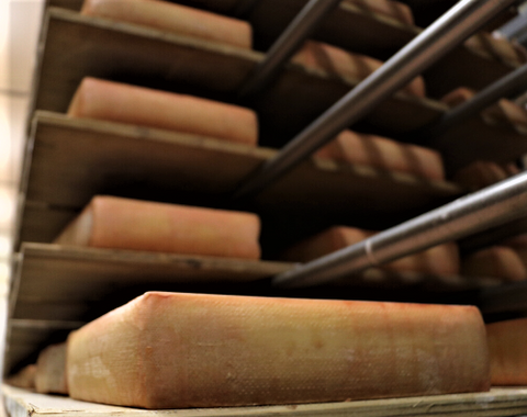Kaeserei Oberli cheese in shelves aging