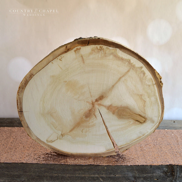 Extra Large Aspen Tree Slice