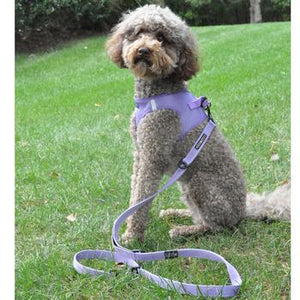 6 Way Multi-Function Dog Leash - Paisley Purple