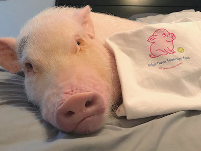Can a pig be man's best friend too? Pickle the mini pig may be your best clue.