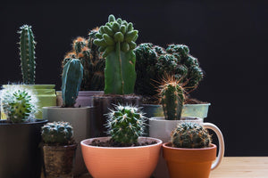 5 Reasons Why Succulents Make For a Great Gift