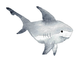Vinyl Sticker - Shark