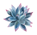 Vinyl Sticker - Blue Succulent