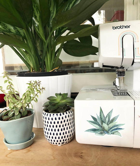 Vinyl Sticker - Striped Succulent