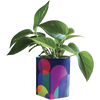 Sow 'N Sow Pop Up Pot - 4 Designs