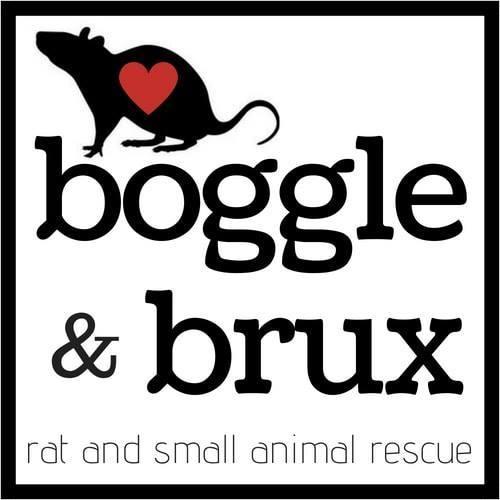Boggle and Brux - Cape Town Rat Rescue
