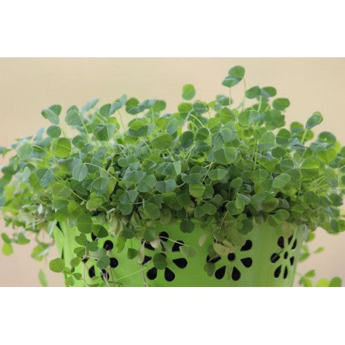 Microgreen Growing Kit - Double - Mischief Pet Products